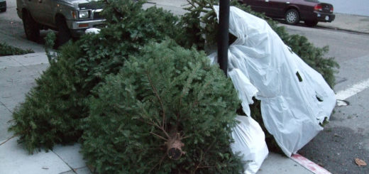 Christmas tree garbage