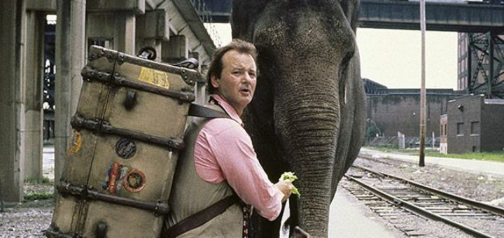 Larger Than Life Bill Murray elephant movie